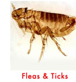 fea termination - pest control